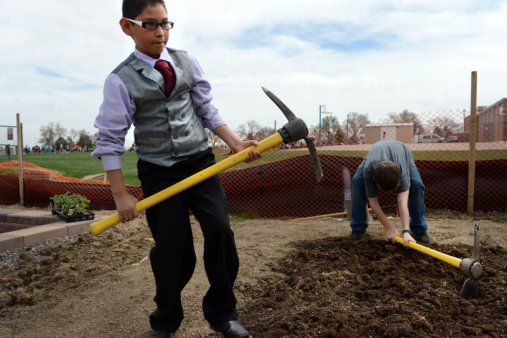 . AURORA, CO. - MAY 18: Francisco Rios, 12, works in a student plot during the North Middle School Garden Festival in Aurora, CO May 18, 2013. Francisco also read a poem during the opening ceremony. The celebration marked the opening of the first school-based community garden in Aurora Public Schools. The project, funded by The Piton Foundation, was made possible through a partnership of Aurora Public Schools, Denver Urban Gardens (DUG), and Anschutz Medical Campus Department of Family Medicine and BRANCH, a multi-disciplinary student organization from the medical campus. A second garden is scheduled to open later this year at Hinkley High School. (Photo By Craig F. Walker/The Denver Post)