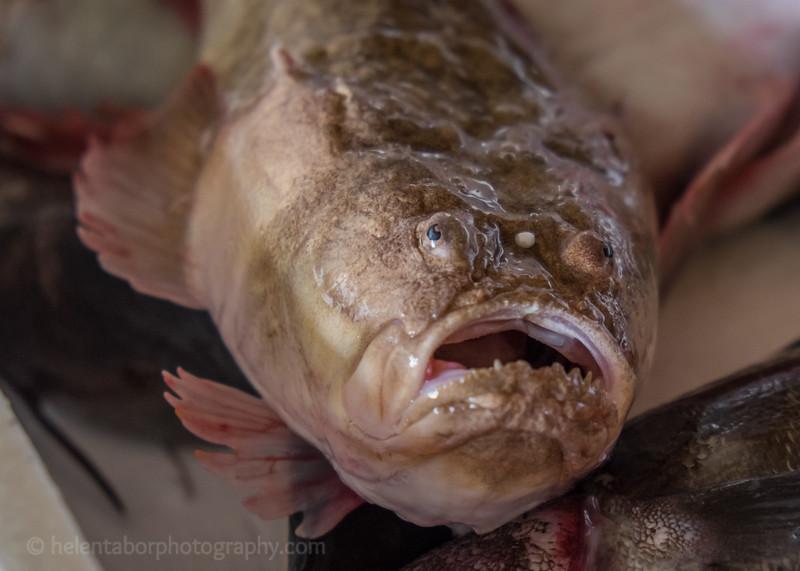 Brindisi trip-fish.jpg
