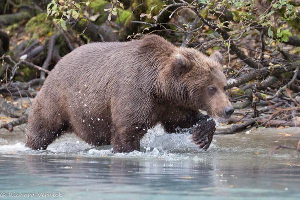 Alaska 2017 Redoubt