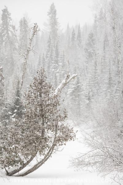 Frozen Cascade River