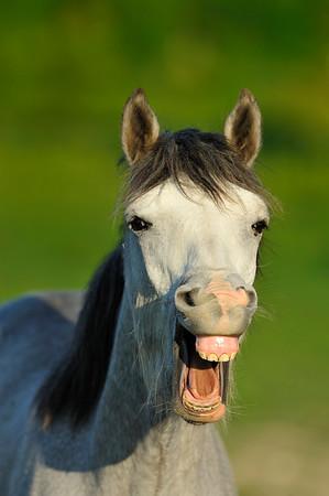 CHEVAUX EN LIBERTÉ - WILD HORSES