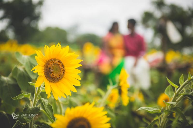 LightStory-CoupleShoot-Hassan-Bangalore-Hoysaleswara-Halebidu-Sunflowers-004.jpg