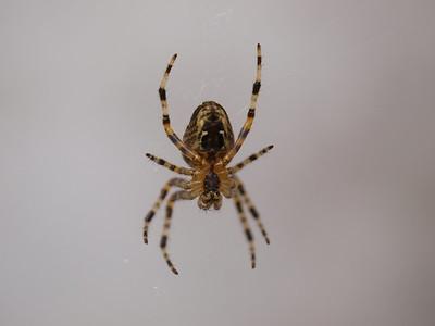 Spiders in the Garden