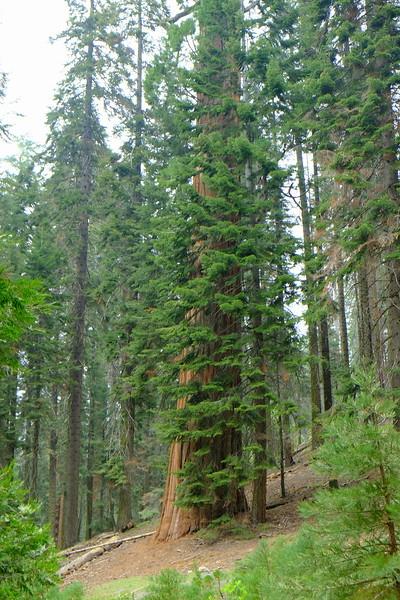 California Day 6 Sequoia 05-30-2017 55.JPG