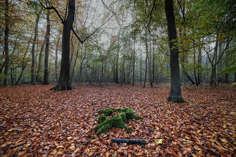 Bisham_Woods-1.jpg