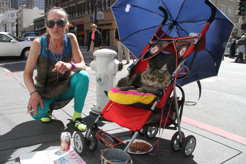 April 17 homeless kitty2.jpg