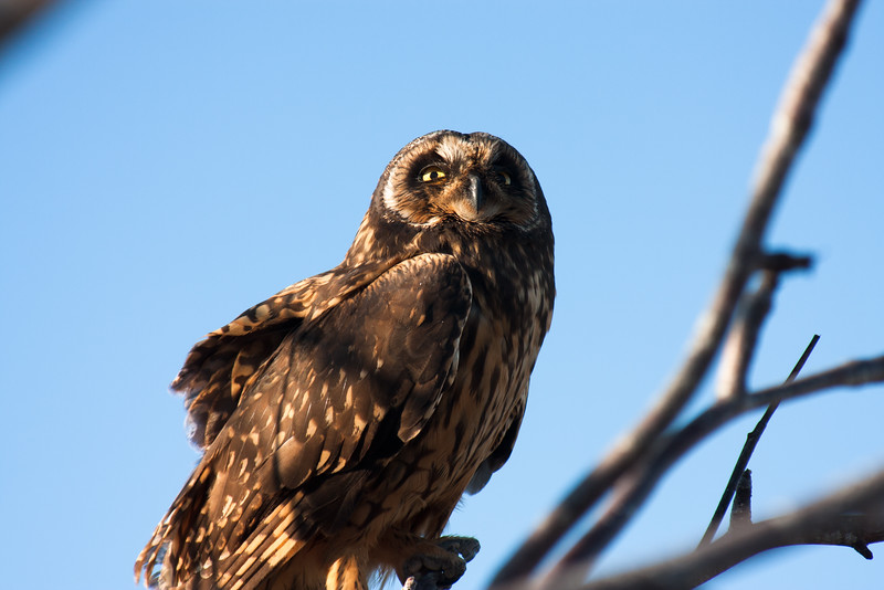 Galapagos Owl Looking Beyond : Journey into Genovesa Island in the Galapagos Archipelago