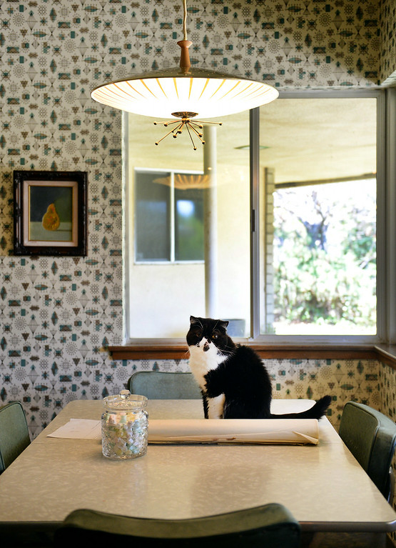 . Nathan Gonzales\' cat, Layla, sits on top of the kitchen table on Thursday, July 10, 2014 in Redlands, Ca. Gonzales\' home was added to the city�s historic register list and is the second post-World War II era building added to it. (Photo by Micah Escamilla/Redlands Daily Facts)