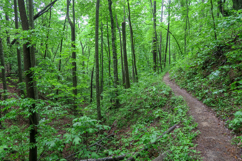 Lower Sidehill Trail -- 2,660'