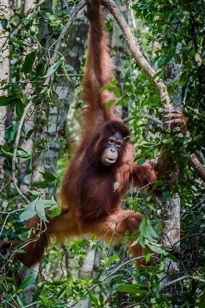 Borneo-2265.jpg