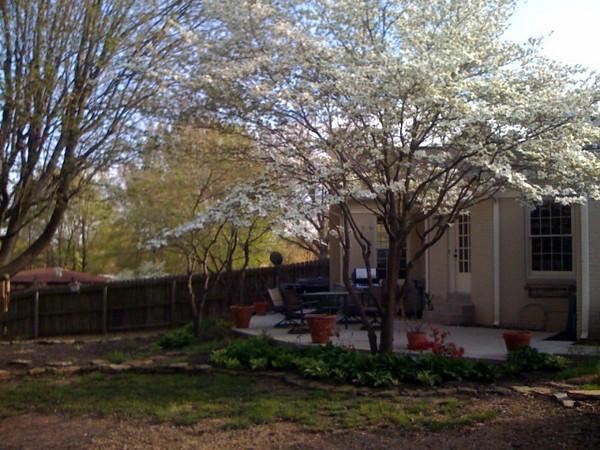 dogwood backyard.jpg
