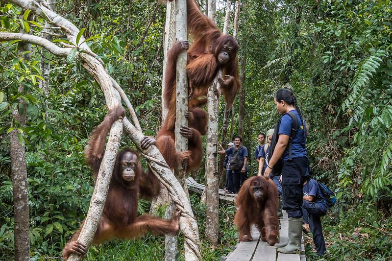 Borneo-2226-2.jpg