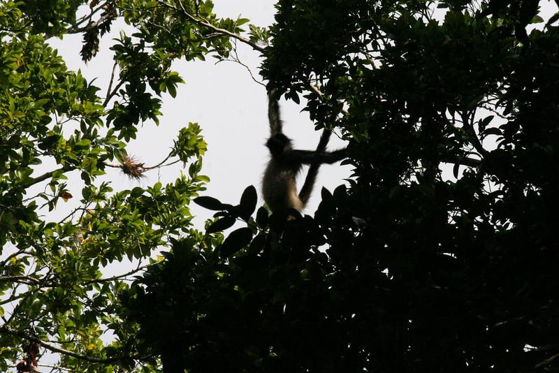 Guatemala Tikal 0 109.JPG