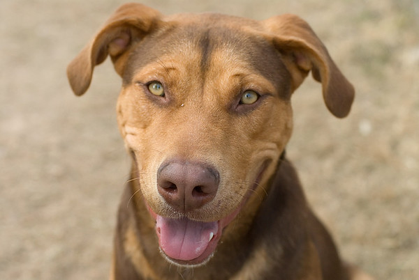 Lance A494168 — ADOPTED 1/23/2008!