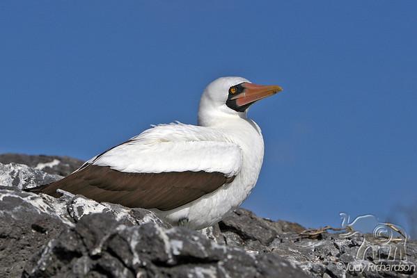 Favorite Galapagos Photos