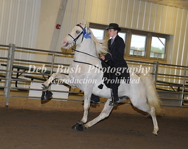 CLASS 29 YOUTH WALKING PONY SPEC