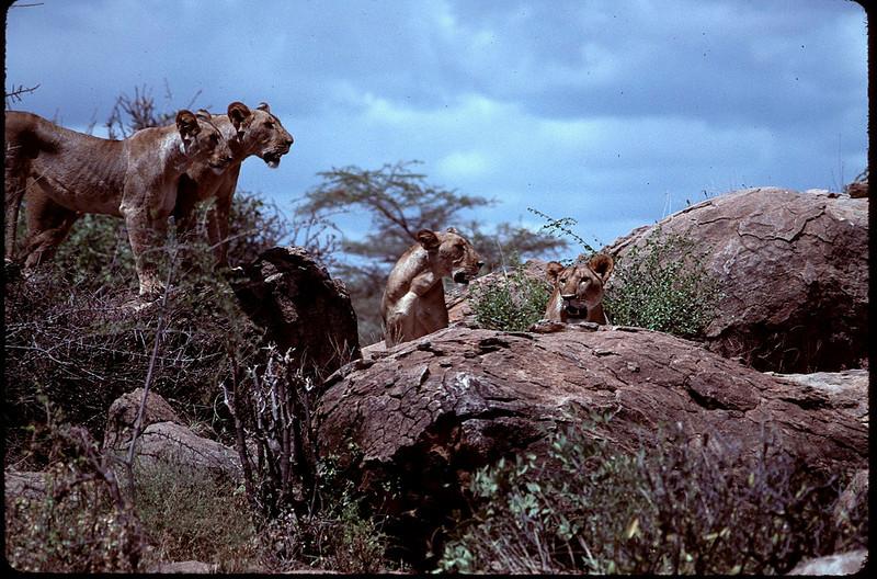Kenya1_116.jpg