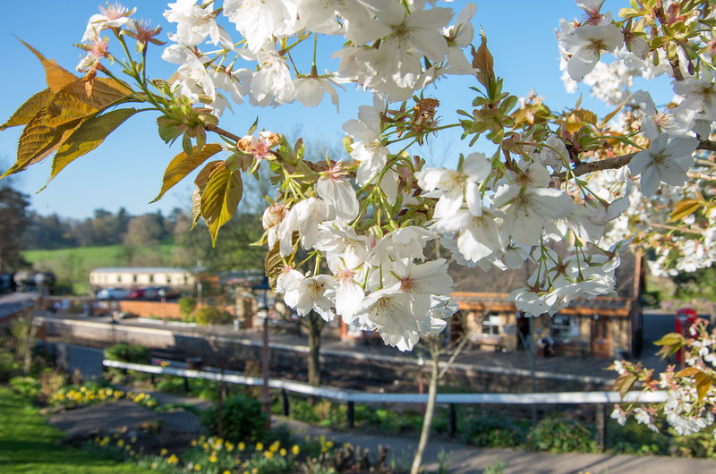 Flowers at Arley station