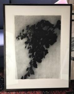 Shadow Leaves #2 POA