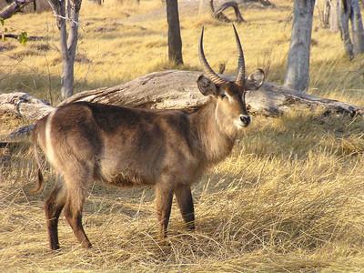 Mammals of Africa