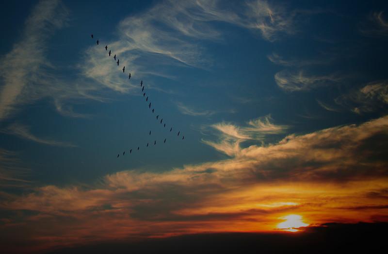 8.31.17 - Prairie Creek Recreation Area: Canada Geese