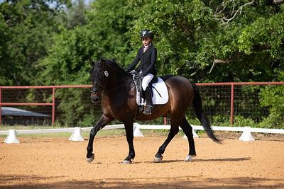 Horse 226