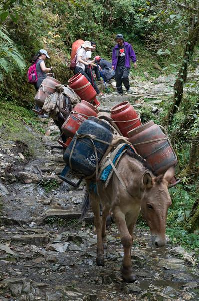 Trekking, Day Two Tikhedhunga to Ghorepani