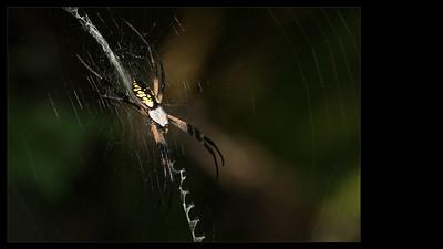Entomology | Entomologie