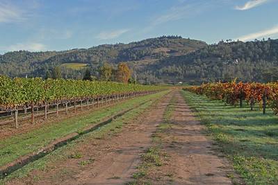 Napa Valley October 2011