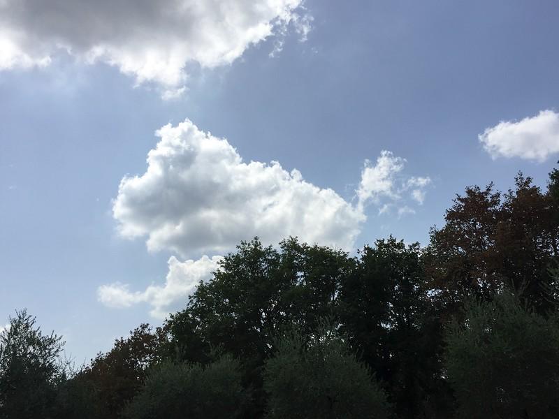 Cloud Poppie