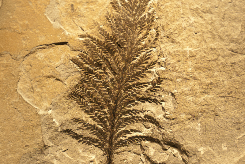Fossil formation in Miguasha National Park, Quebec, Canada