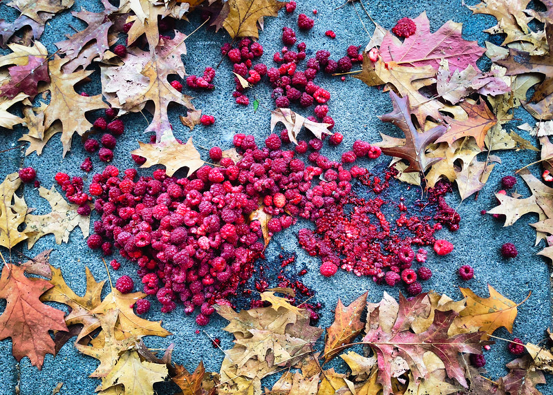 Raspberries dumped and smashed on a sidewalk in Port Townsend, WA.