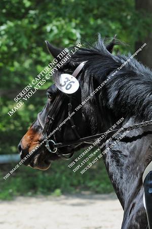 36 Izzy & Bailey 05-27-2012
