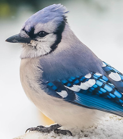 Winter Birds 2.16.21