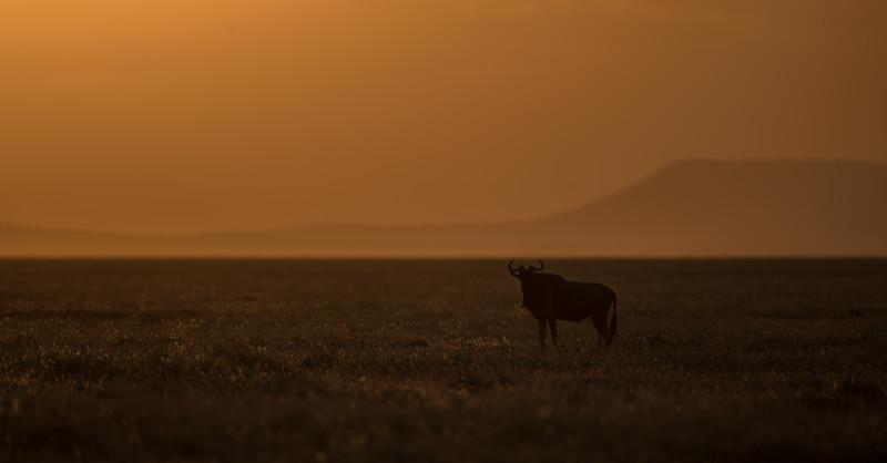 Tanzania_Feb_2018-776.jpg