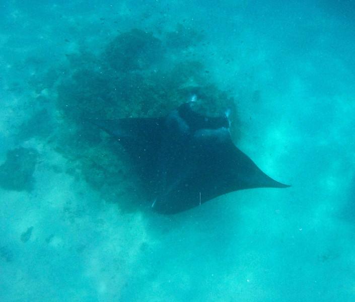Getting to see manta rays while snorkeling was incredible! - Raanui Snorkel Trip - Bora Bora