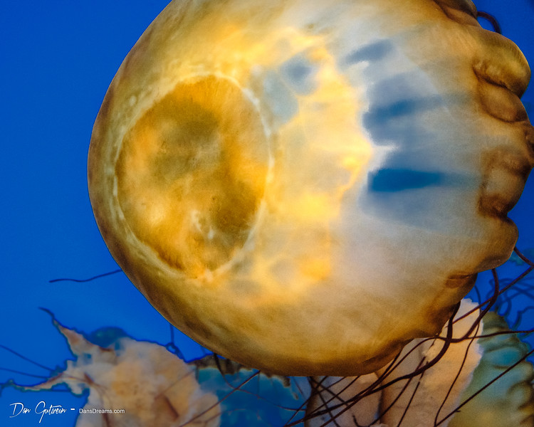 Jelly Fish -7.jpg