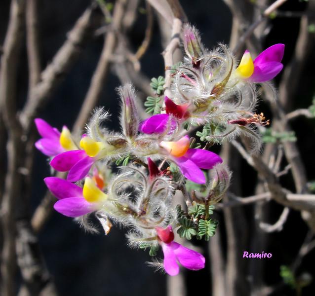 Flower IMG_3161.jpg