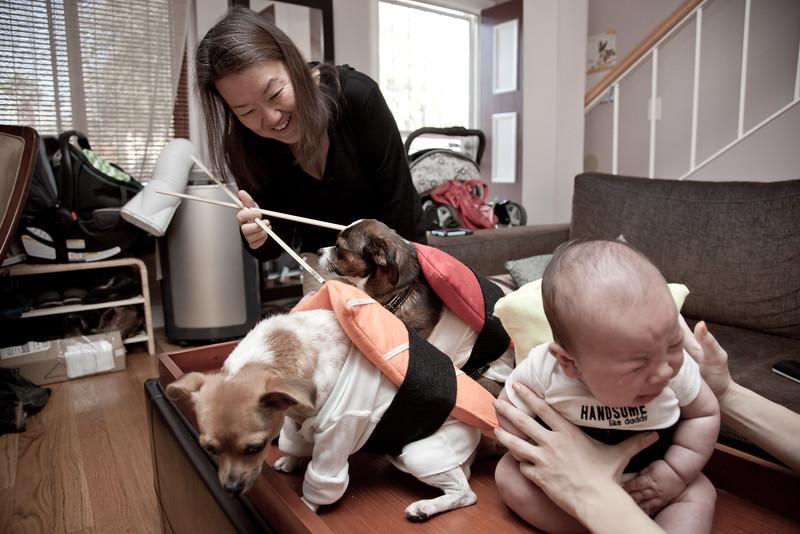 Dog-sushi-halloween-75.jpg