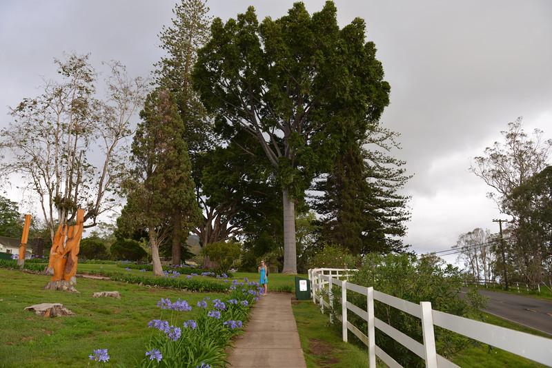 Maui - Hawaii - May 2013 - 31.jpg