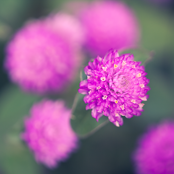 20110926_Flower_8.png