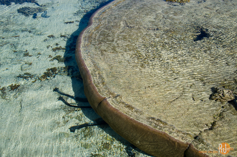 Australia-queensland-Lady Elliot Island-6181.jpg