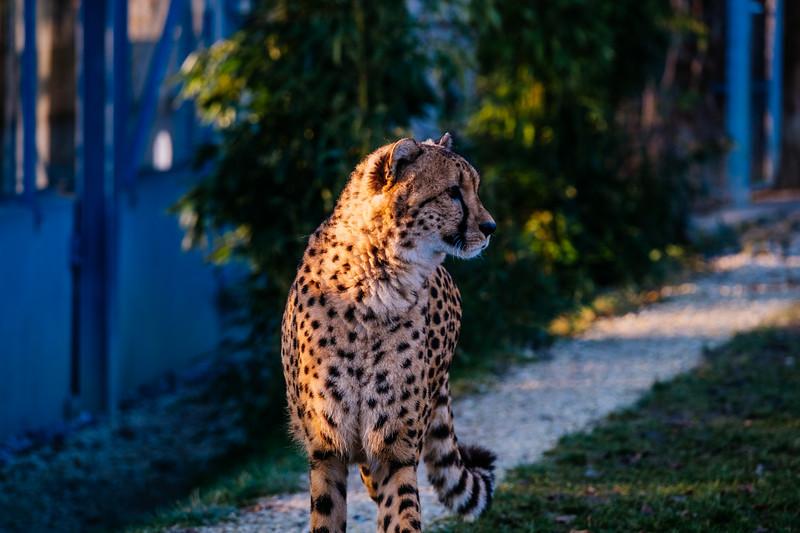 Tonis Zoo-0262.jpg