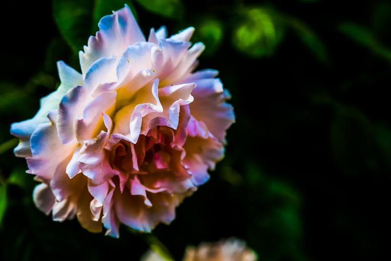 © Gloss Photography Studios-628.jpg