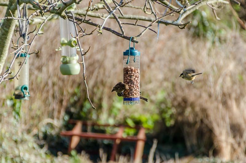 Birds 180118-58.jpg