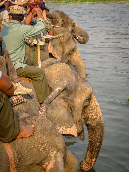chitwan-national-park-14.jpg