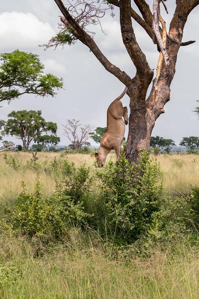 Uganda_T_QE-1545.jpg