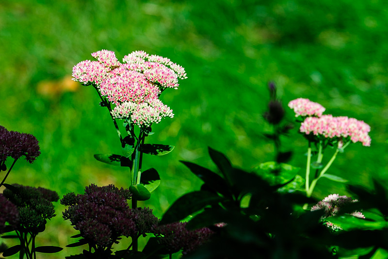 20170908 Flowers-0112-2.jpg