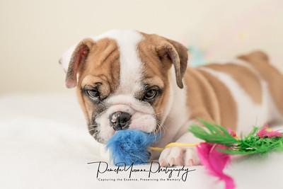 Michelle Puppy tutu