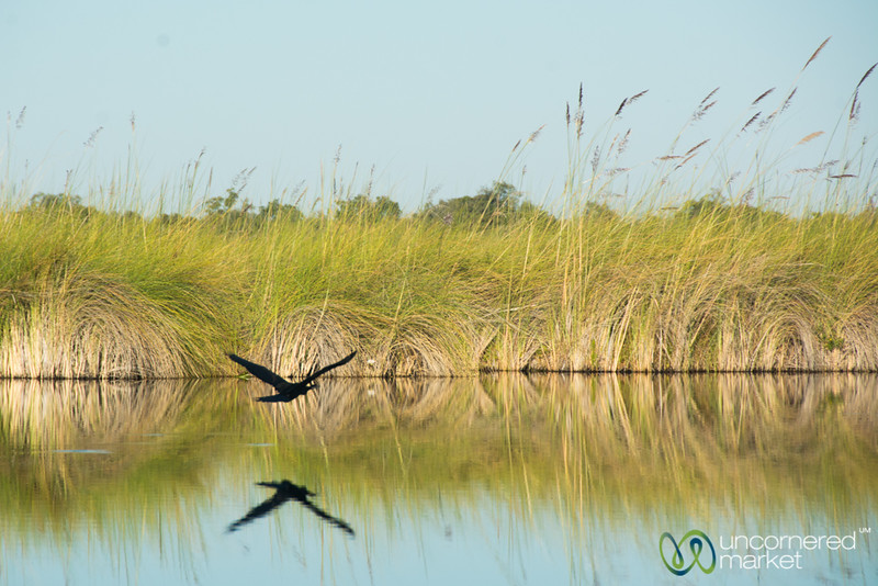 Taking Flight Along Khwai River - Camp Xakanaxa, Botswana